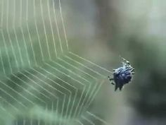 Spider building a web