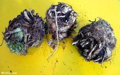 Creepiest Vegetables! Creepy, Herbs, Vegetables, Food, Veggies, Essen, Vegetable Recipes, Yemek, Herb