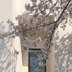Imagem de flowers, aesthetic, and blossom Gray Aesthetic, Couple Aesthetic, Korean Aesthetic, Aesthetic Themes, Aesthetic Photo, Aesthetic Pictures, Aesthetic Fashion, Picture Wall, Photo Wall