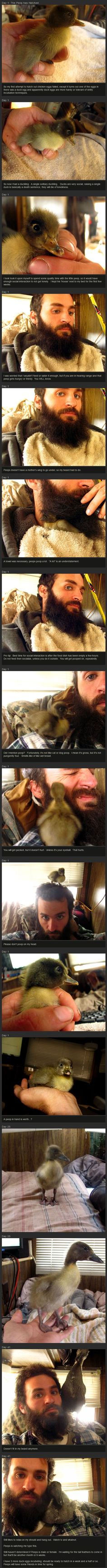 When your duck doesn't fit in your beard anymore. This is cute