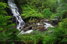 Scottish Jungle by TobiasRichter  fresh green wild grün einsam tief steil UK Water Waterfall Nebel Wald River Fern Natur Wasser