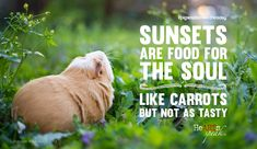 """""""Sunsets are food for the souls (like carrots but not as tasty."""" Wise words from guinea pig Bret T. Michaels of @heartsspeak"""