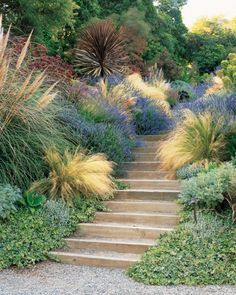 Awash in Color: The first rule of stair-side plants: What grows by your feet gets extra attention. The etched leaves of Hedera helix 'Needlepoint,' the gold-plumed Stipa tenuissima, and Lavandula 'Grosso,' which releases its scent when rubbed, all reward close scrutiny.  Martha Stewart Garden Tours
