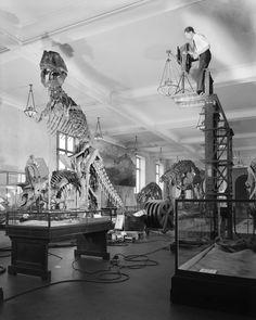 Photographing Tyrannosaurus skeleton