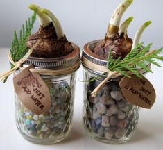 12 DIY Plant Gift Ideas for Christmas — DIY Holiday Narcissus Gift Idea