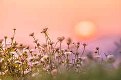 A fading sun, radiant colors, and beautiful little flowers. What more do you need to feel happy?