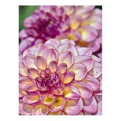 Unusual Flowers, Purple Flowers, Beautiful Flowers, Dahlia Flowers, Cactus Flower, Yellow Roses, Pink Roses, Peonies Garden, Pink Garden