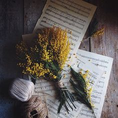 Music Witch Aesthetic requested by Love Flowers, Wild Flowers, Beautiful Flowers, Yellow Flowers, Fred Instagram, Foto Art, Mimosas, Flower Power, Planting Flowers