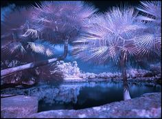 Beautiful Infrared Photography
