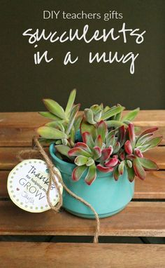 DIY teachers gifts, succulents in a mug that says --thanks for helping me grow.- So cute!
