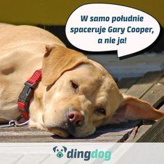 W upały pamiętaj o właściwych porach spacerów. #DingDog #dog #pies #walk #spacer