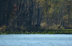 Not sure, but it looks to me like a big bear in the woods across Parker Pond.