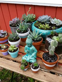 Succulents in painted terracotta pots.