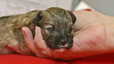 Volunteer work at an animal shelter could help land you a job. (Thinkstock)
