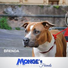 Brenda #Mongesfriends