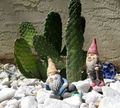 my men are guarding the cacti