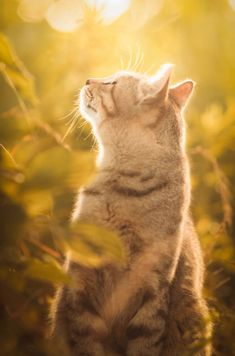 stunning cat pictures 12 (1)