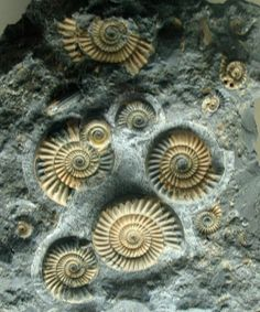 Ammonites - So that's where they went after the Israelites disposed them from them promised land.