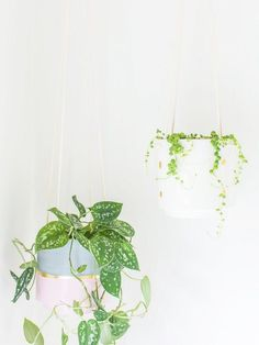 Best Breathtaking Indoor Plant Wall Garden – Page 9528051806 – Gardening Decor Diy Hanging Planter, Planter Ideas, Plant Shelves, Plant Holders, Indoor Plants, Air Plants, House Plants, Make It Yourself, Apartment Therapy