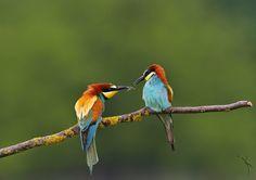 Wildlife Photography - Community - Google+