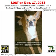 Please spread the word!  Arrow was last seen near State road 7 & Johnson Rd Coconut Creek in Coconut Creek.  He is a tan/white/yellow male Chihuahua Short Haired.  Contact: Phone: (561) 672-4527.  He has a long body short hair and short legs.  He has a white arrow shaped patch on his forehead and the top of his head.    More info photos dog's location on the HeLP map and to Contact:  http://ift.tt/2l0noOw  #LostDogsFlorida #HelpingLostPets #LostDog #ChihuahuaShortHaired #CoconutCreek