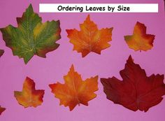 Ordering Leaves by Size and other Leaf Activities - free printable