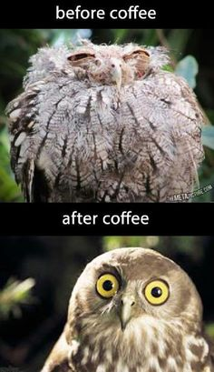If the shaver doesn't work, try the coffee!