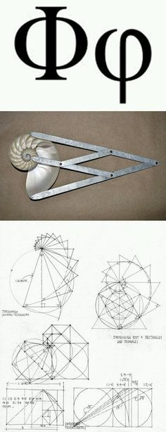 geometry of Fibonacci. I would like to understand this more clearly: geometry of Fibonacci. I would like to understand this more clearly: Geometry Art, Sacred Geometry, Geometry Tattoo, Nature Geometry, Fractal Geometry, Fibonacci Golden Ratio, Phi Golden Ratio, Divine Proportion, Pseudo Science