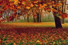 Autumn colors by  ANTONI on 500px