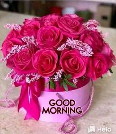 Good Morning Love You, Good Morning Thursday, Free Good Morning Images, Latest Good Morning, Good Morning Funny, Good Morning Flowers, Good Morning Picture, Good Morning Messages, Morning Pictures