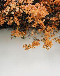 Orange bougainvillea // instagram photography ideas inspiration Tumblr hipsters floral aesthetics