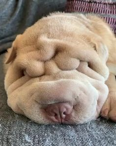 dog training,dog hacks,teach your dog,dog learning,dog tips Shar Pei Puppies, Cute Puppies, Cute Dogs, Dogs And Puppies, Doggies, Funny Dog Videos, Funny Dogs, Fluffy Animals, Cute Animals