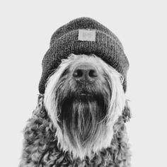 Animals And Pets, Funny Animals, Cute Animals, Beautiful Dogs, Animals Beautiful, Hipster Dog, Dog Nose, Dog Portraits, Dog Photos