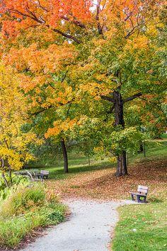 Autumn walk by Pierre Leclerc Photography Autumn Walks, Walking By, Pathways, Architecture Design, Infographic, Sidewalk, Country Roads, Journey, Park