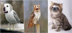 Meet Your New Favorite Animals: Dirds, Meowls And Slittens