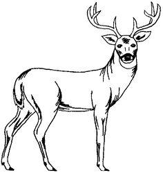 Free Printable Stencil Patterns | Wildlife Patterns; Wood Burning, Painting, Crafts