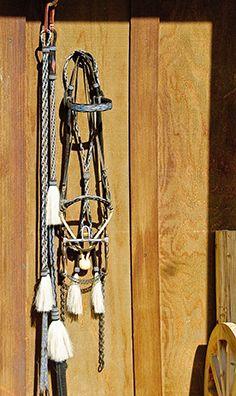 Bill and Teresa Black / Custom Rawhide Braiding & Horsehair Hitching