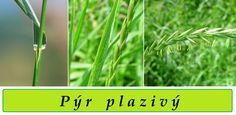 Web plný bylinek. Herbs, Health, Flora, Fitness, Health Care, Herb, Plants, Salud, Medicinal Plants