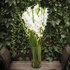 Gladiolen Floral Arrangements, 30th, Party, Gladiolus Bouquet, Flower Vases, Bouquets, Flowers, Gladioli, Flower Arrangement