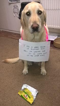 Shame Your Pet