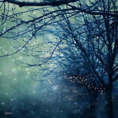 Silent Night - big flaky snow, bare trees, and white lights.