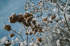 winter flowers by Aleksandr Saenko