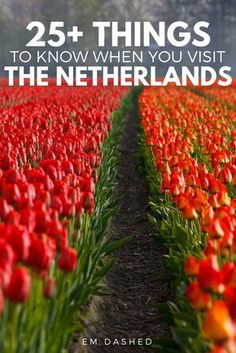 Planning a trip to the Netherlands? Click through for a foreign resident's things to know about Holland -- including tips on the Dutch language, train travel in the Netherlands, King's Day, and more.