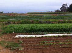#AgroÉcologie : de Nouvelles Avancées pour une généralisation au plus grand nombre d' #Agriculteurs