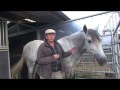 Petting, hugging and kissing Horses... be careful because for them it has another meaning - YouTube