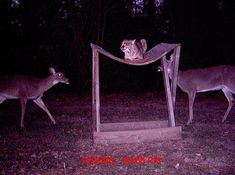 Check out the best trail camera photos we've ever seen. You'll crack up at some of them, and be amazed at the others.