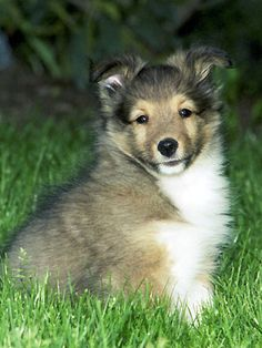 Adorable puppy on the grass                       follow me for more puppie cuteness