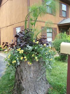 For any trees than have to come down as too near the house, etc., I'd love to leave as many stumps as possible and plant some similar to this.