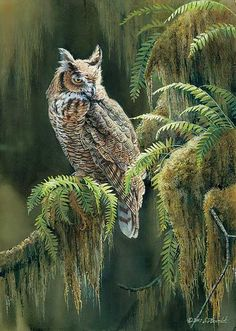 owl paintings - Google Search