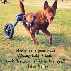 """""""Never bend your head. Always hold it high. Look the world right in the eye.""""   ~Helen Keller"""